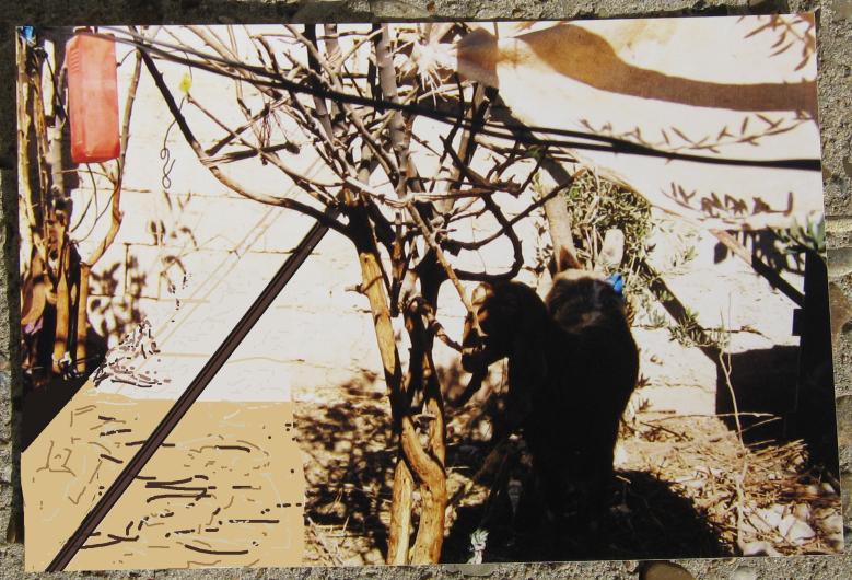 bedouins-fatimas-goat-without-nijma3