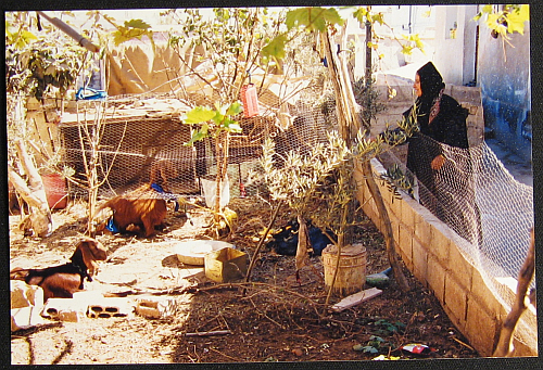 bedouins-fatimas-goatpen1