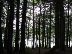 Clarksburg State Park Massachusetts