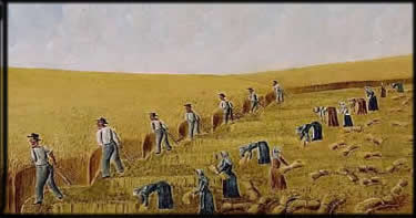 olof krans harvest