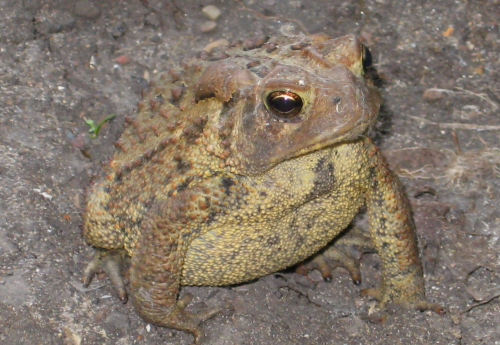toad closeup1