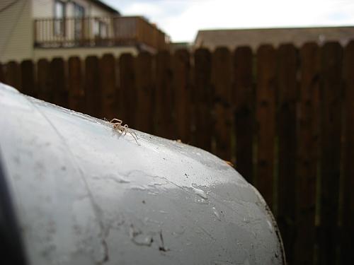 spider on flowerpot1