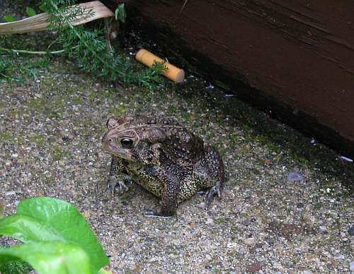 toad with butt