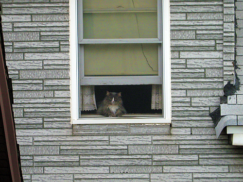 window cat serene