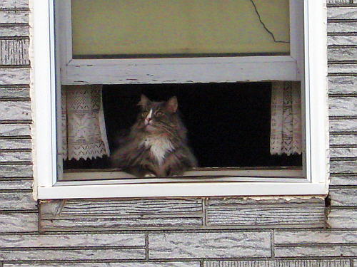window cat two color eyes