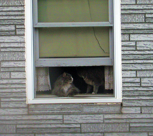 window cat with friend
