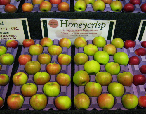 apples honeycrisp