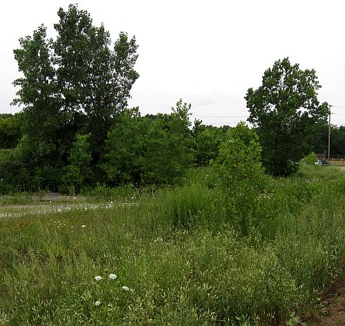 walk-cottonwoods