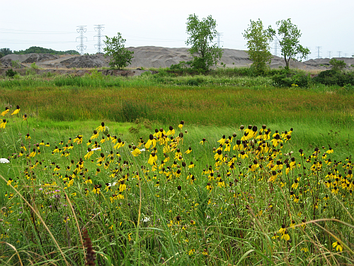 walk-quarry with sunflowers