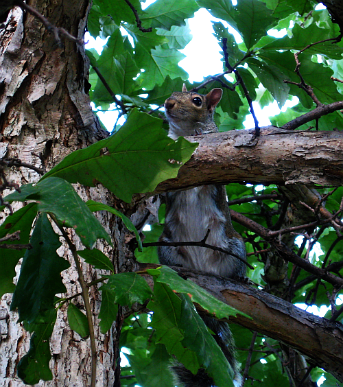 walk squirrel 5