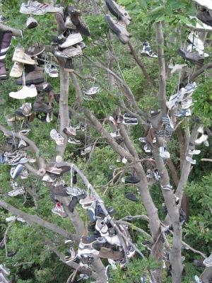 4 shoe tree