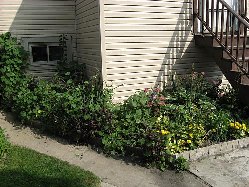 front garden comparison