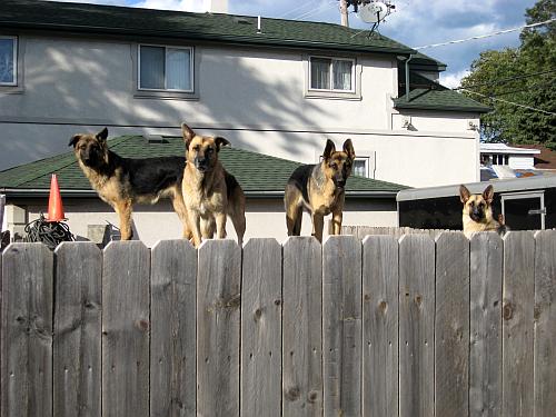 walk dogs1