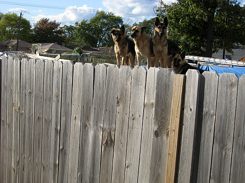walk dogs2