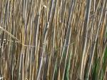 salt marshD